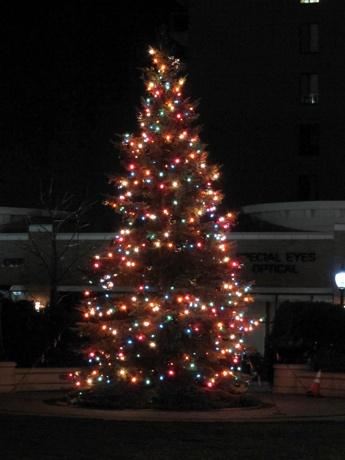 Harmony Park Tree, Arlington Heights, Illinois